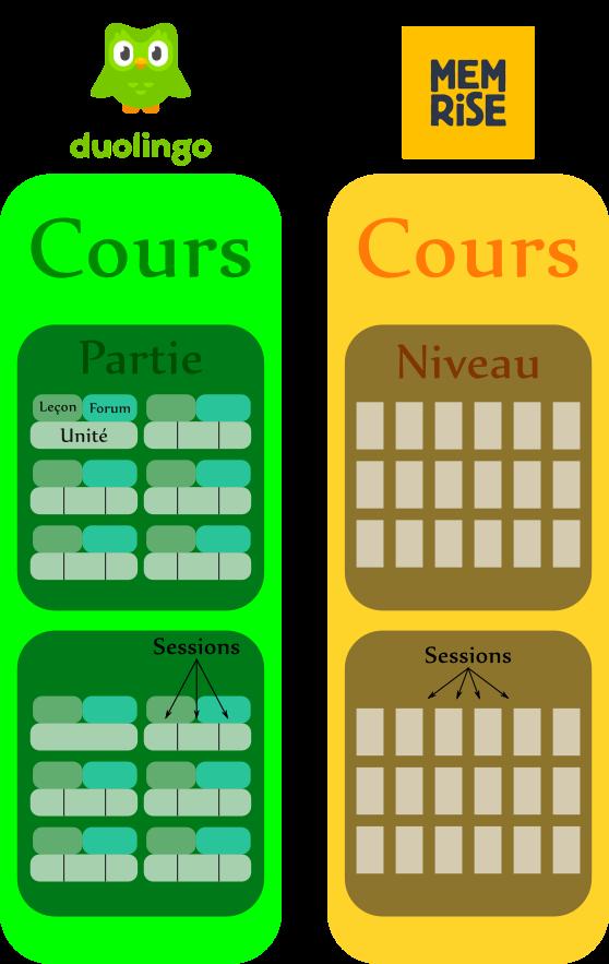 Schéma comparatif de la structure de Duolingo et Memrise